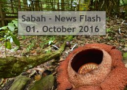 Sabah News Flash - 1. October 2016