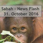 Sabah News Flash - 31 October 2016